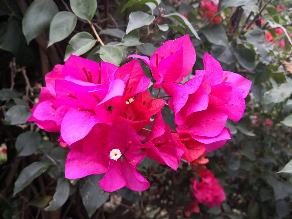 Blumen am Rand